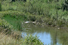 fiume roya